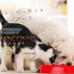 最愛のペット(犬・猫)の寿命が長くなるおいしいご飯は『ブラバンソンヌ』